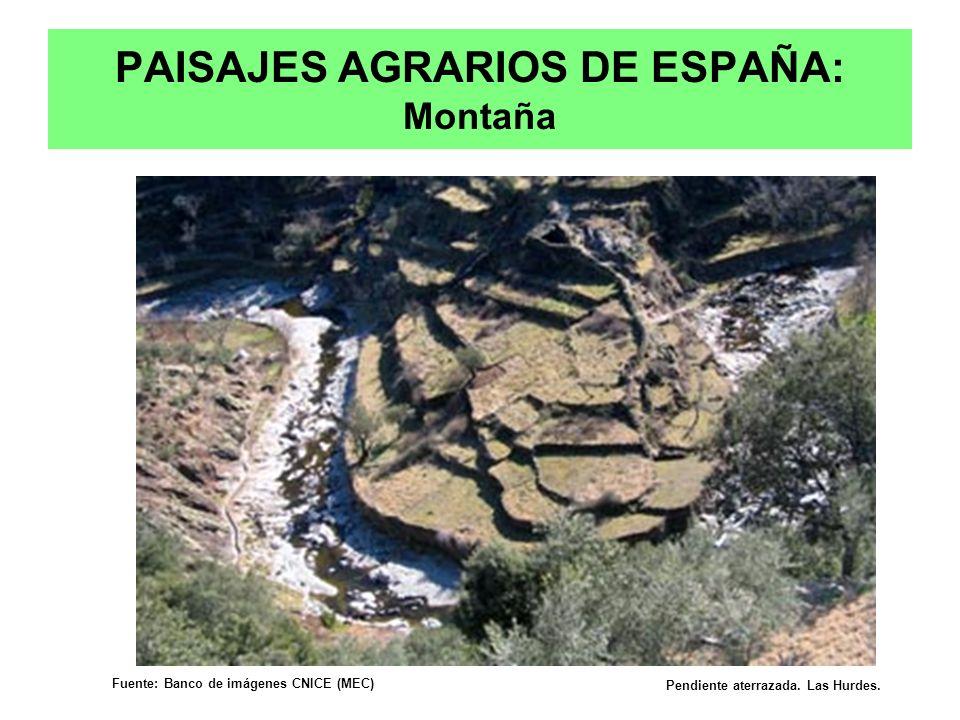 PAISAJES AGRARIOS DE ESPAÑA: Montaña Pendiente aterrazada. Las Hurdes. Fuente: Banco de imágenes CNICE (MEC) Prof. Isaac Buzo Sánchez