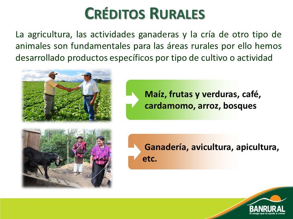 C RÉDITOS R URALES La agricultura, las actividades ganaderas y la cría de otro tipo de animales son fundamentales para las áreas rurales por ello hemo