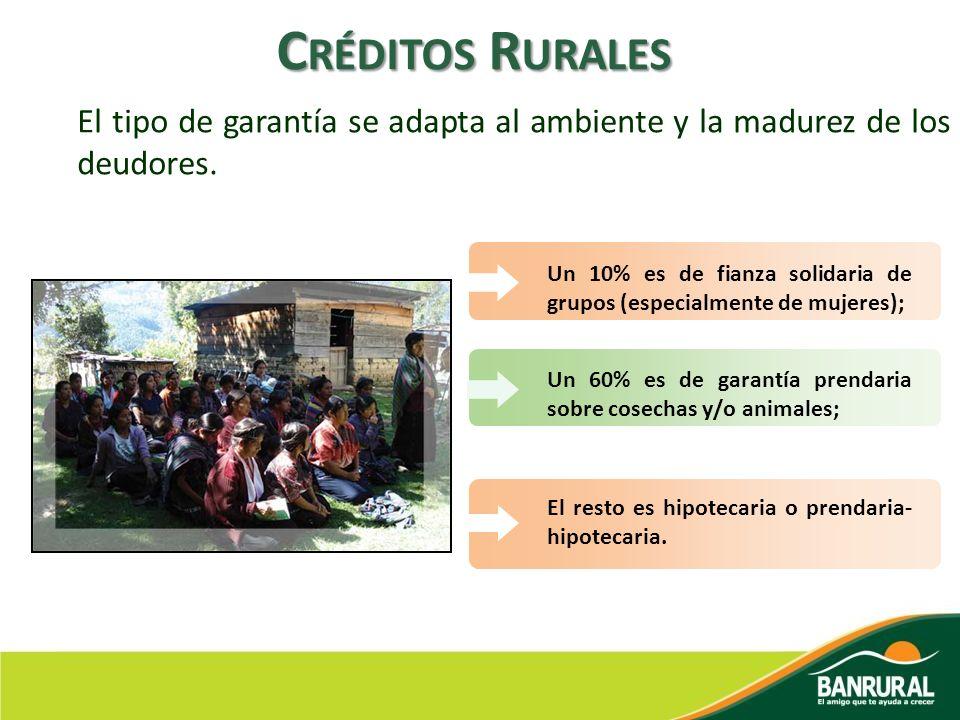 El tipo de garantía se adapta al ambiente y la madurez de los deudores. C RÉDITOS R URALES El resto es hipotecaria o prendaria- hipotecaria. Un 60% es