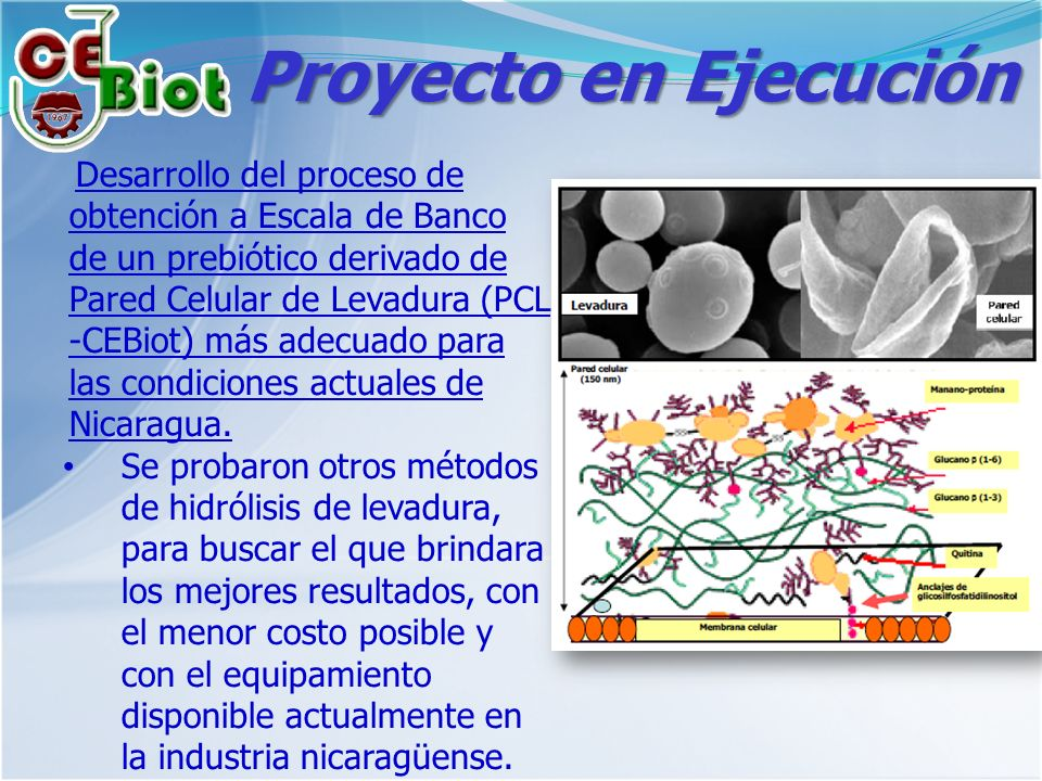 Proyecto en Ejecución Desarrollo del proceso de obtención a Escala de Banco de un prebiótico derivado de Pared Celular de Levadura (PCL -CEBiot) más adecuado para las condiciones actuales de Nicaragua.