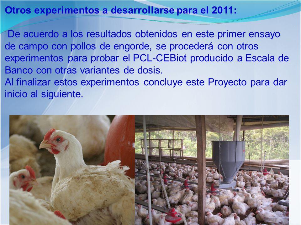 Otros experimentos a desarrollarse para el 2011: De acuerdo a los resultados obtenidos en este primer ensayo de campo con pollos de engorde, se procederá con otros experimentos para probar el PCL-CEBiot producido a Escala de Banco con otras variantes de dosis.
