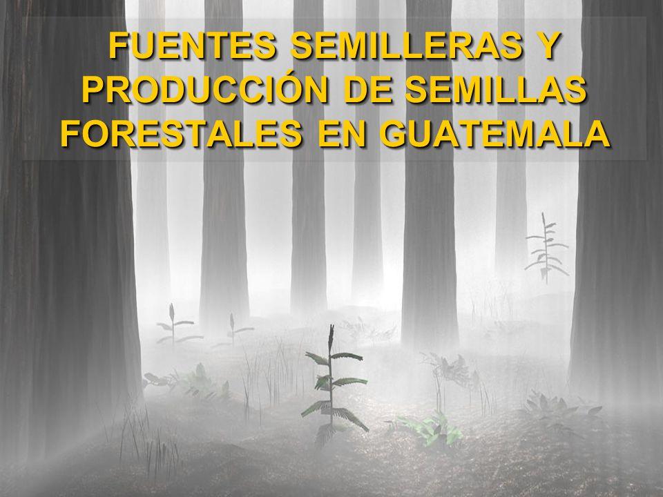 FUENTES SEMILLERAS Y PRODUCCIÓN DE SEMILLAS FORESTALES EN GUATEMALA FUENTES SEMILLERAS Y PRODUCCIÓN DE SEMILLAS FORESTALES EN GUATEMALA