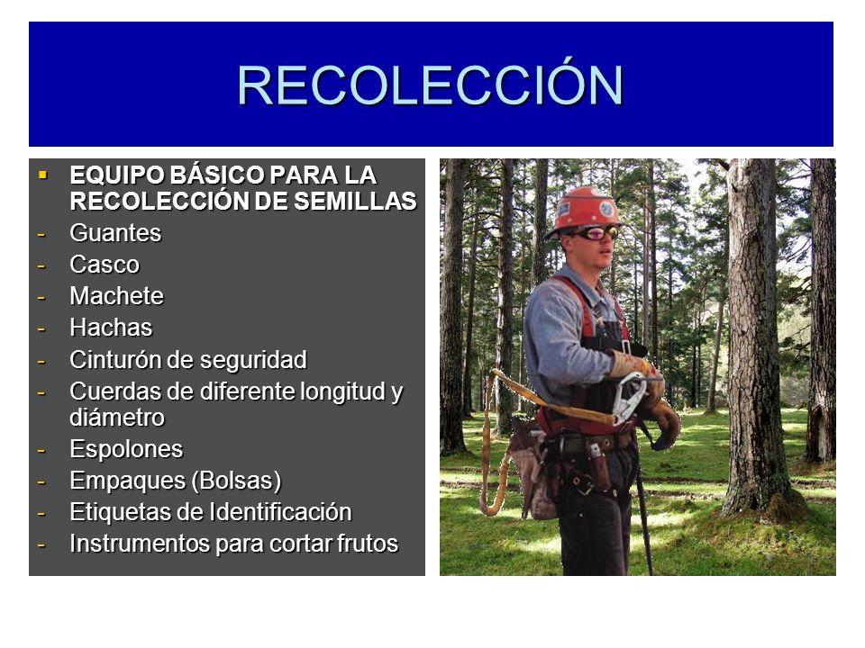 RECOLECCIÓN EQUIPO BÁSICO PARA LA RECOLECCIÓN DE SEMILLAS EQUIPO BÁSICO PARA LA RECOLECCIÓN DE SEMILLAS -Guantes -Casco -Machete -Hachas -Cinturón de