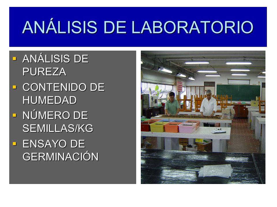 ANÁLISIS DE LABORATORIO ANÁLISIS DE PUREZA ANÁLISIS DE PUREZA CONTENIDO DE HUMEDAD CONTENIDO DE HUMEDAD NÚMERO DE SEMILLAS/KG NÚMERO DE SEMILLAS/KG EN