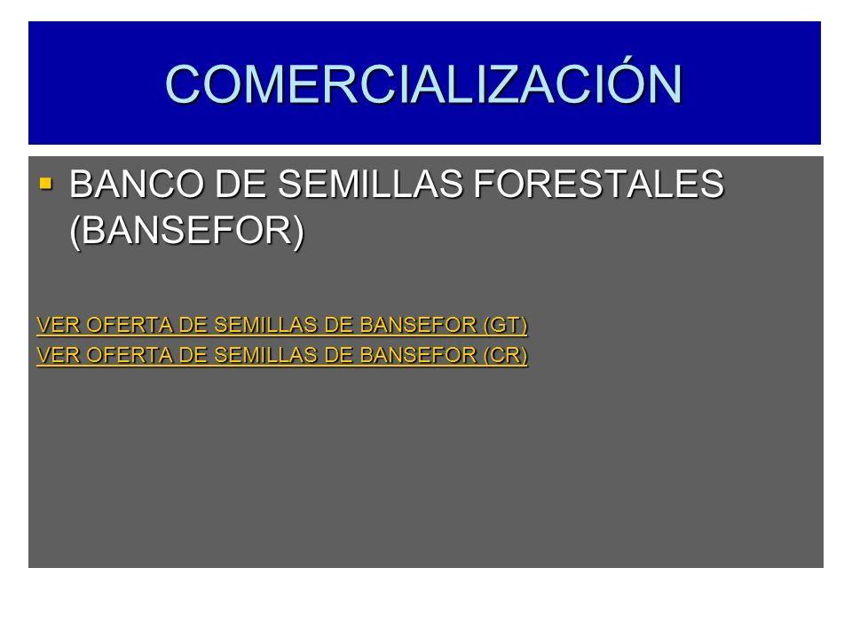 COMERCIALIZACIÓN BANCO DE SEMILLAS FORESTALES (BANSEFOR) BANCO DE SEMILLAS FORESTALES (BANSEFOR) VER OFERTA DE SEMILLAS DE BANSEFOR (GT) VER OFERTA DE