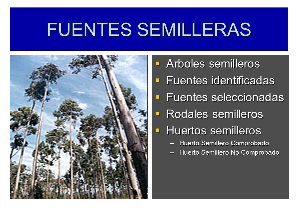 FUENTES SEMILLERAS Arboles semilleros Arboles semilleros Fuentes identificadas Fuentes identificadas Fuentes seleccionadas Fuentes seleccionadas Rodal