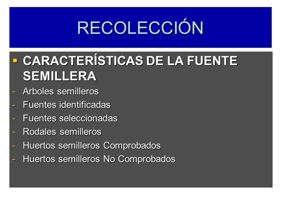 RECOLECCIÓN CARACTERÍSTICAS DE LA FUENTE SEMILLERA CARACTERÍSTICAS DE LA FUENTE SEMILLERA -Arboles semilleros -Fuentes identificadas -Fuentes seleccio