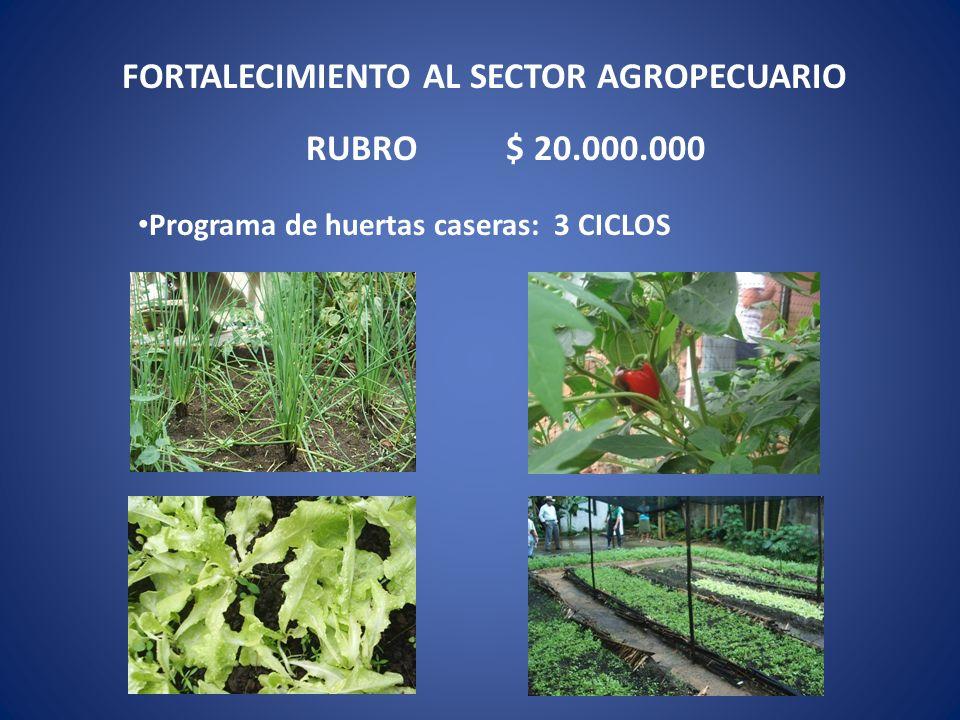 Programa de huertas caseras: 3 CICLOS FORTALECIMIENTO AL SECTOR AGROPECUARIO RUBRO $ 20.000.000