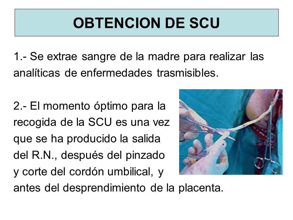 OBTENCION DE SCU 1.- Se extrae sangre de la madre para realizar las analíticas de enfermedades trasmisibles. 2.- El momento óptimo para la recogida de