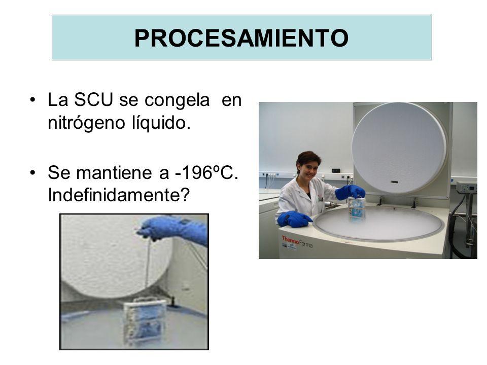 PROCESAMIENTO La SCU se congela en nitrógeno líquido. Se mantiene a -196ºC. Indefinidamente?