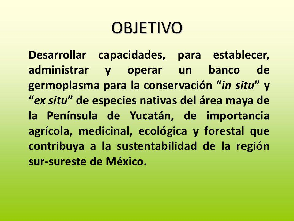 OBJETIVO Desarrollar capacidades, para establecer, administrar y operar un banco de germoplasma para la conservación in situ yex situ de especies nati