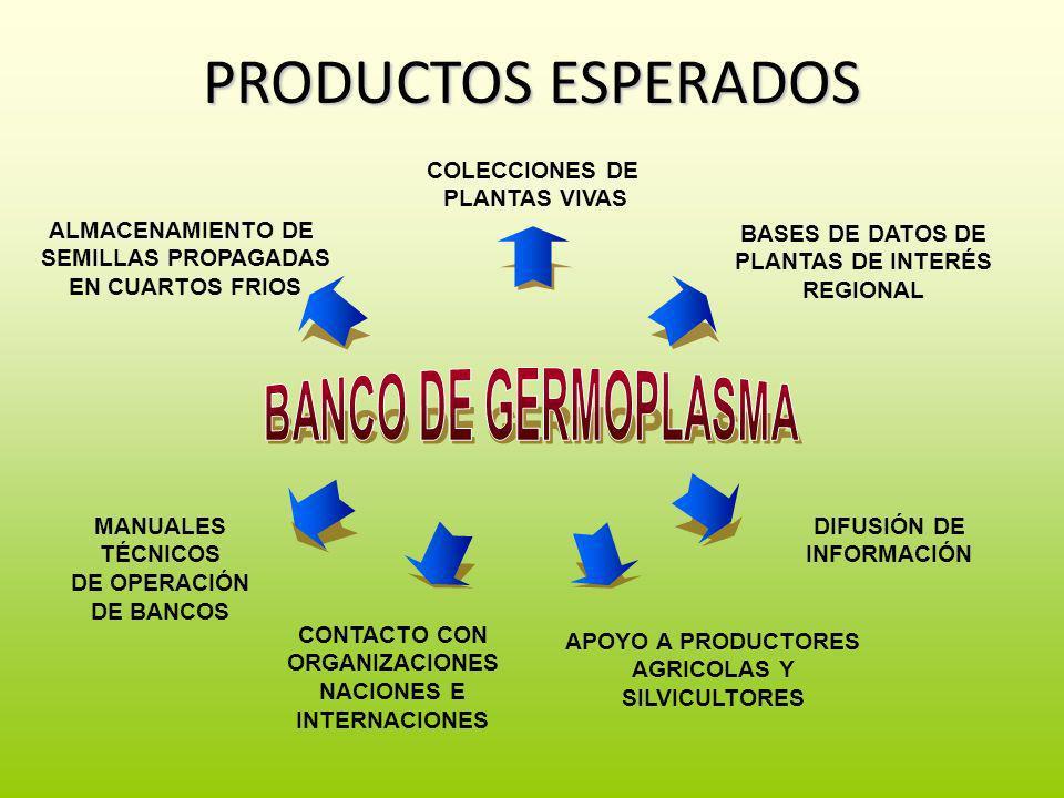 PRODUCTOS ESPERADOS ALMACENAMIENTO DE SEMILLAS PROPAGADAS EN CUARTOS FRIOS COLECCIONES DE PLANTAS VIVAS DIFUSIÓN DE INFORMACIÓN BASES DE DATOS DE PLAN