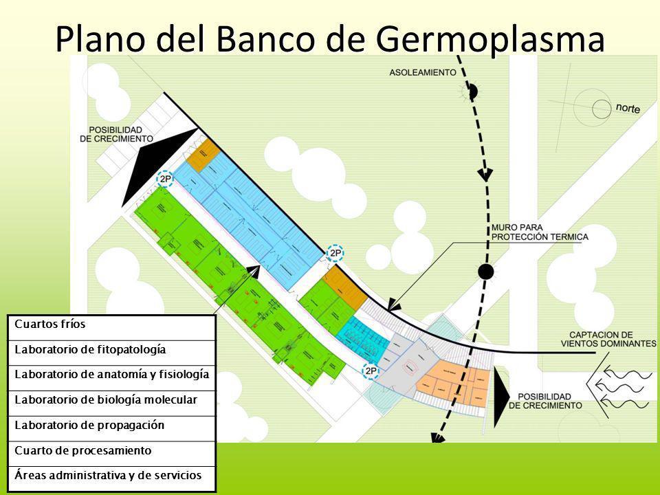 Plano del Banco de Germoplasma Cuartos fríos Laboratorio de fitopatología Laboratorio de anatomía y fisiología Laboratorio de biología molecular Labor