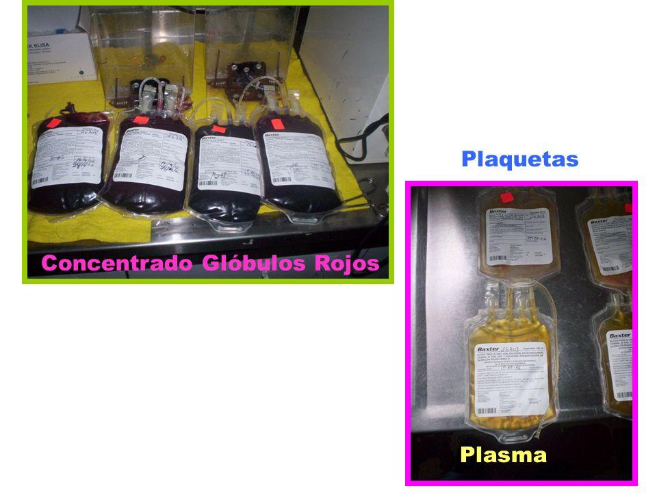 Concentrado Glóbulos Rojos Plaquetas Plasma