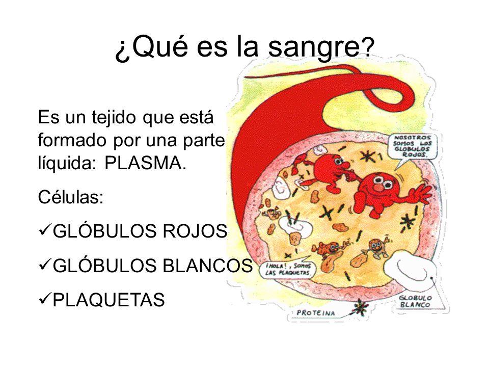 ¿Qué es la sangre ? Es un tejido que está formado por una parte líquida: PLASMA. Células: GLÓBULOS ROJOS GLÓBULOS BLANCOS PLAQUETAS