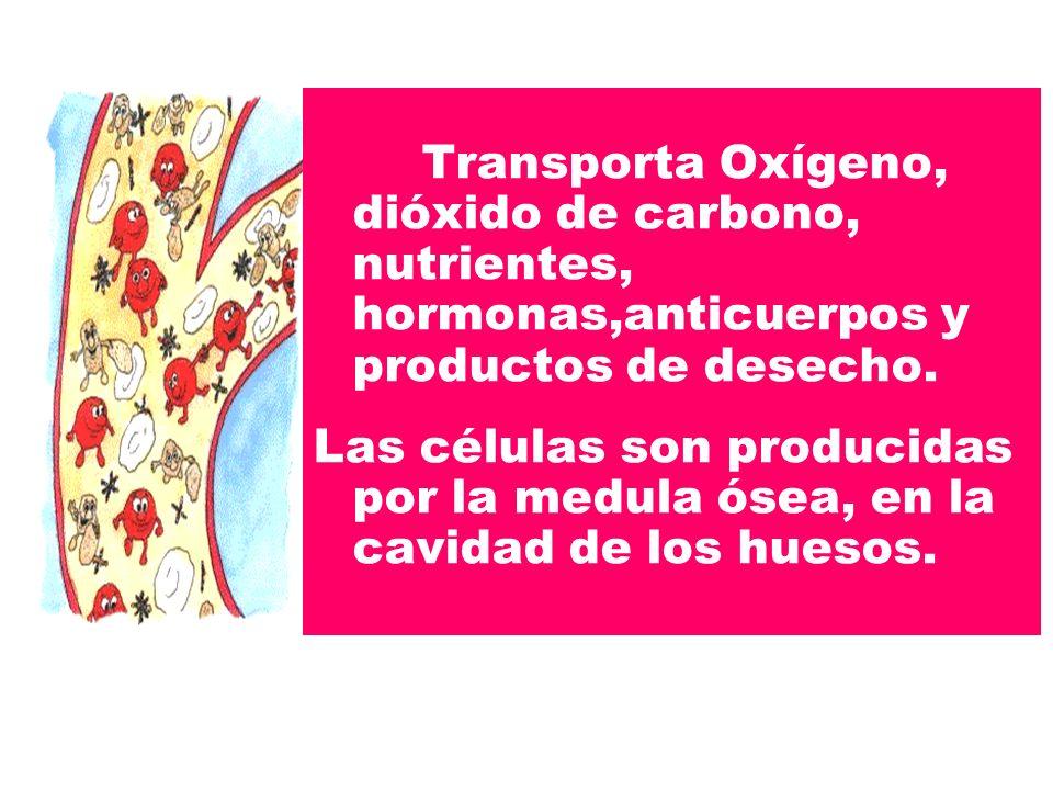 Transporta Oxígeno, dióxido de carbono, nutrientes, hormonas,anticuerpos y productos de desecho. Las células son producidas por la medula ósea, en la