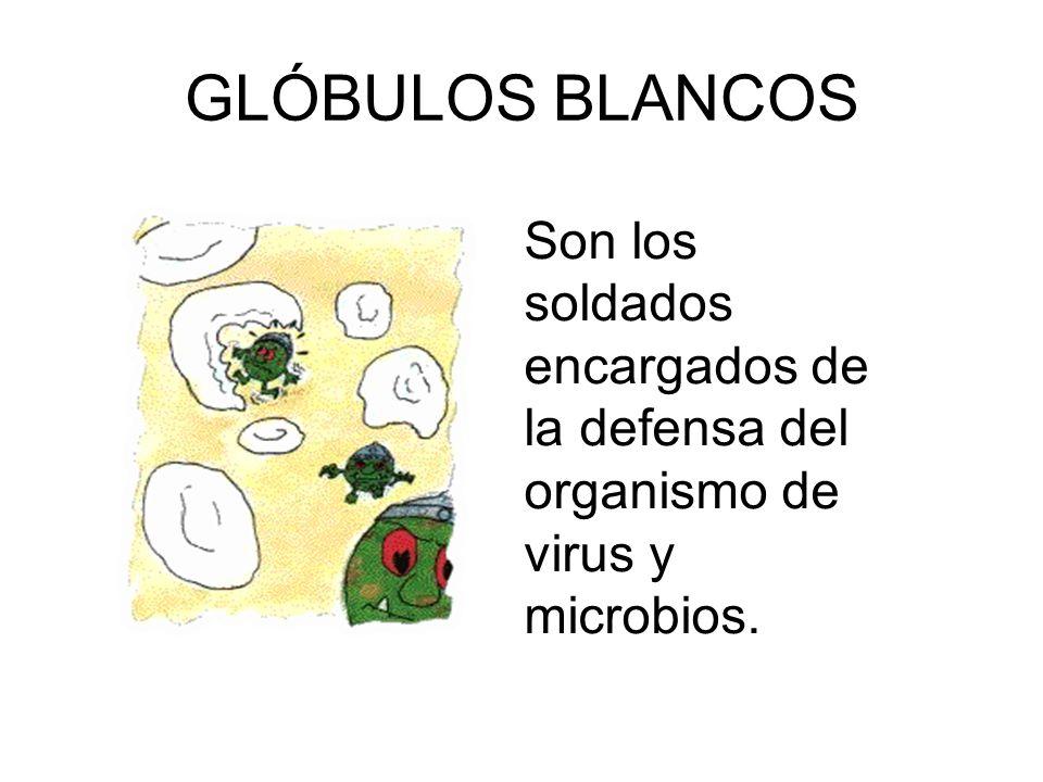 GLÓBULOS BLANCOS Son los soldados encargados de la defensa del organismo de virus y microbios.