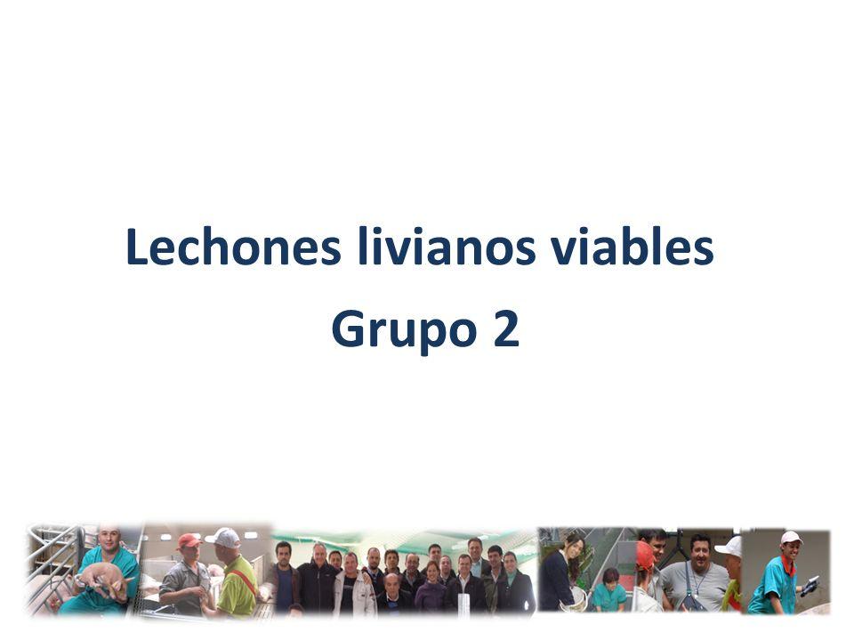 Lechones livianos viables Grupo 2