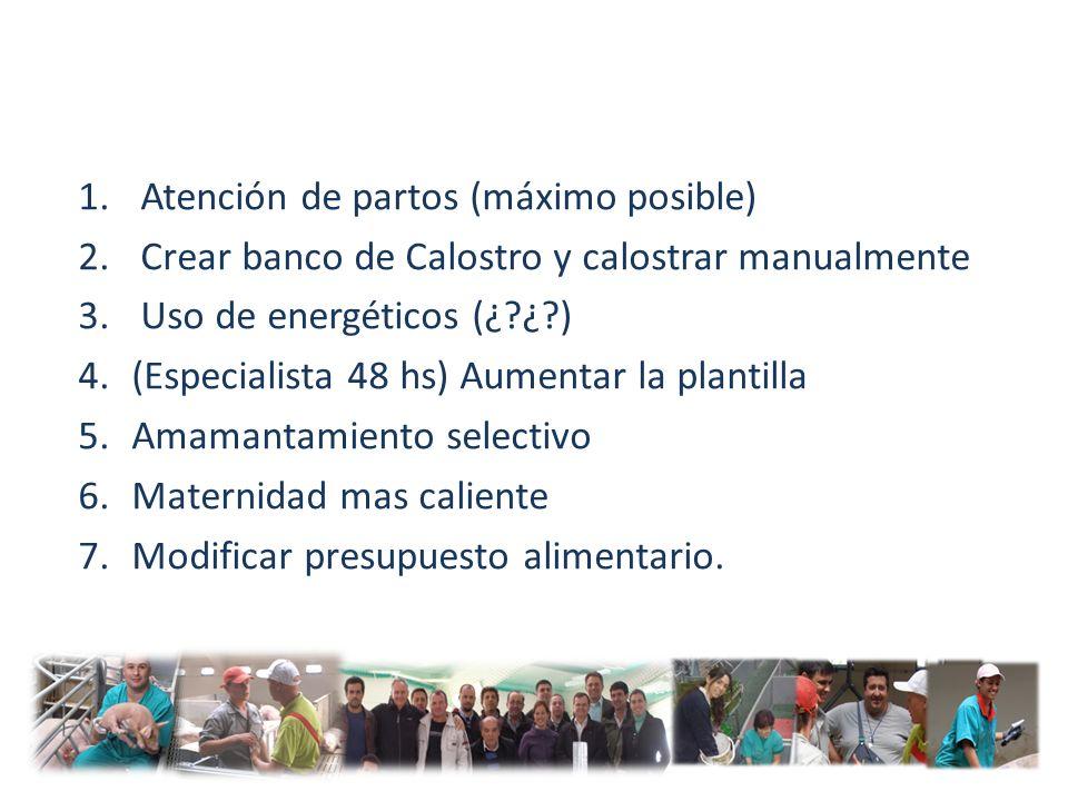 1. Atención de partos (máximo posible) 2. Crear banco de Calostro y calostrar manualmente 3. Uso de energéticos (¿?¿?) 4.(Especialista 48 hs) Aumentar