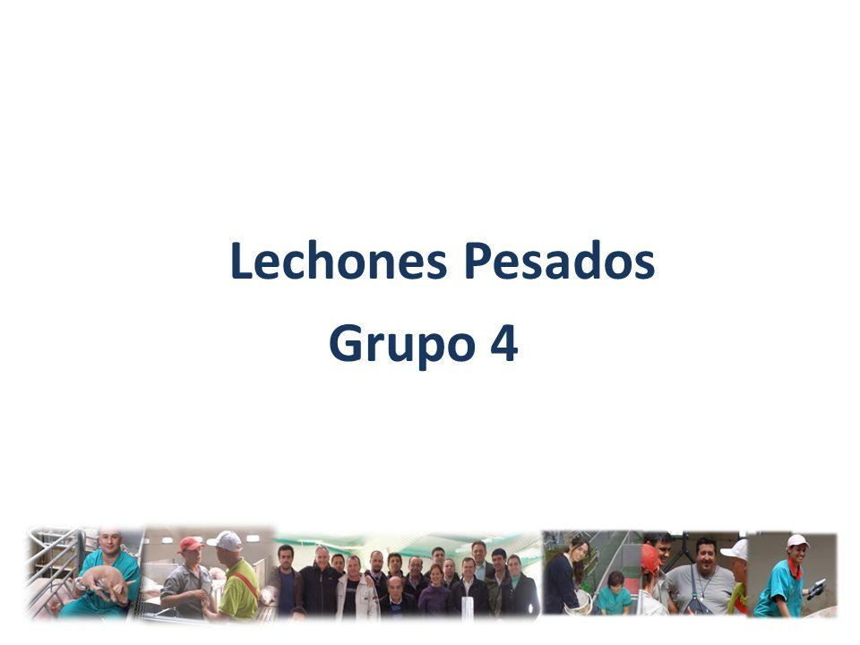 Lechones Pesados Grupo 4