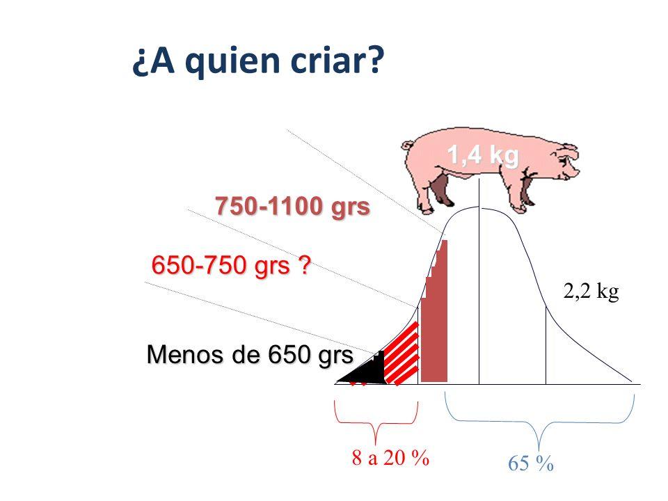 Edad al Destete: ¿A quien criar?. 1,4 kg 2,2 kg 650-750 grs ? 65 % 8 a 20 % 750-1100 grs Menos de 650 grs