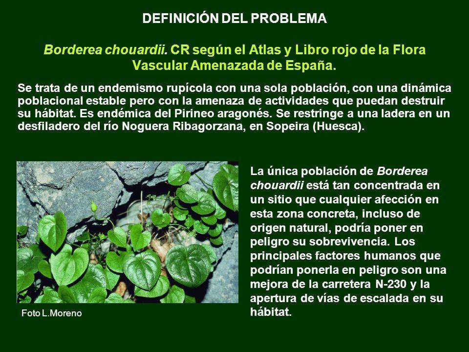 DEFINICIÓN DEL PROBLEMA Borderea chouardii. CR según el Atlas y Libro rojo de la Flora Vascular Amenazada de España. Se trata de un endemismo rupícola