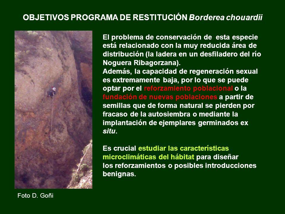 OBJETIVOS PROGRAMA DE RESTITUCIÓN Borderea chouardii El problema de conservación de esta especie está relacionado con la muy reducida área de distribu
