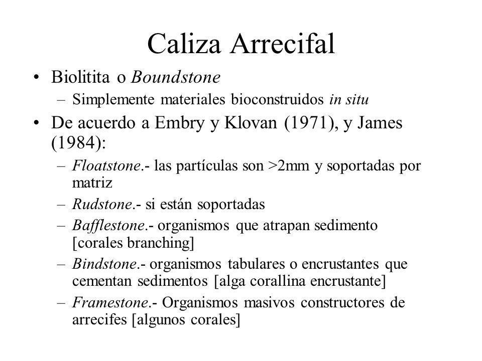 Caliza Arrecifal Biolitita o Boundstone –Simplemente materiales bioconstruidos in situ De acuerdo a Embry y Klovan (1971), y James (1984): –Floatstone