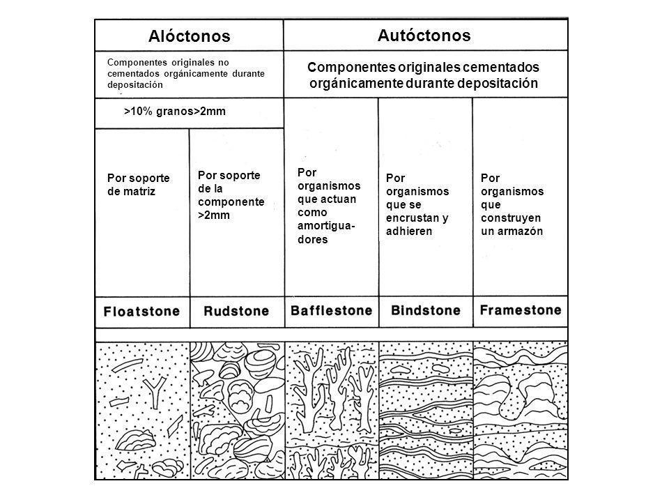 Por organismos que se encrustan y adhieren Por organismos que actuan como amortigua- dores Por organismos que construyen un armazón Por soporte de la