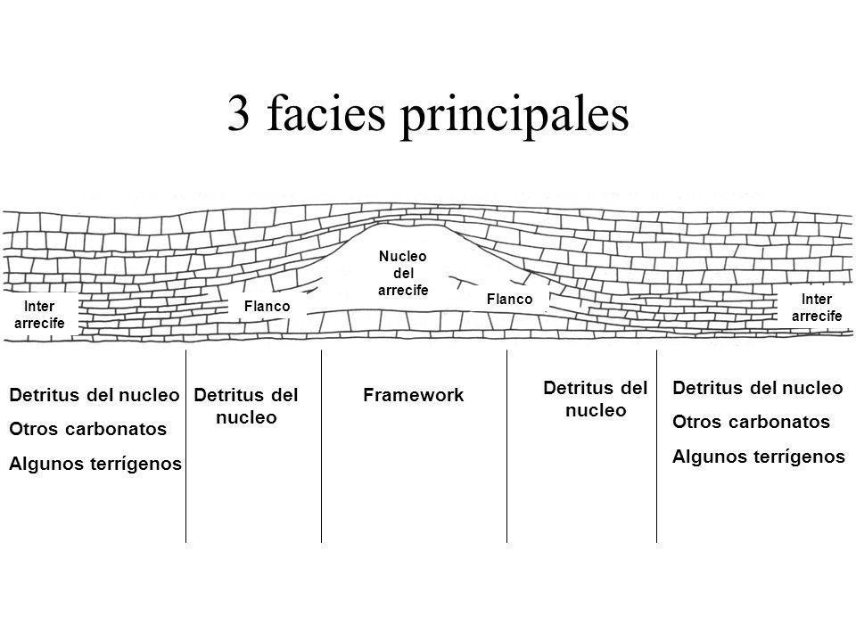 3 facies principales Detritus del nucleo Otros carbonatos Algunos terrígenos FrameworkDetritus del nucleo Otros carbonatos Algunos terrígenos Nucleo d