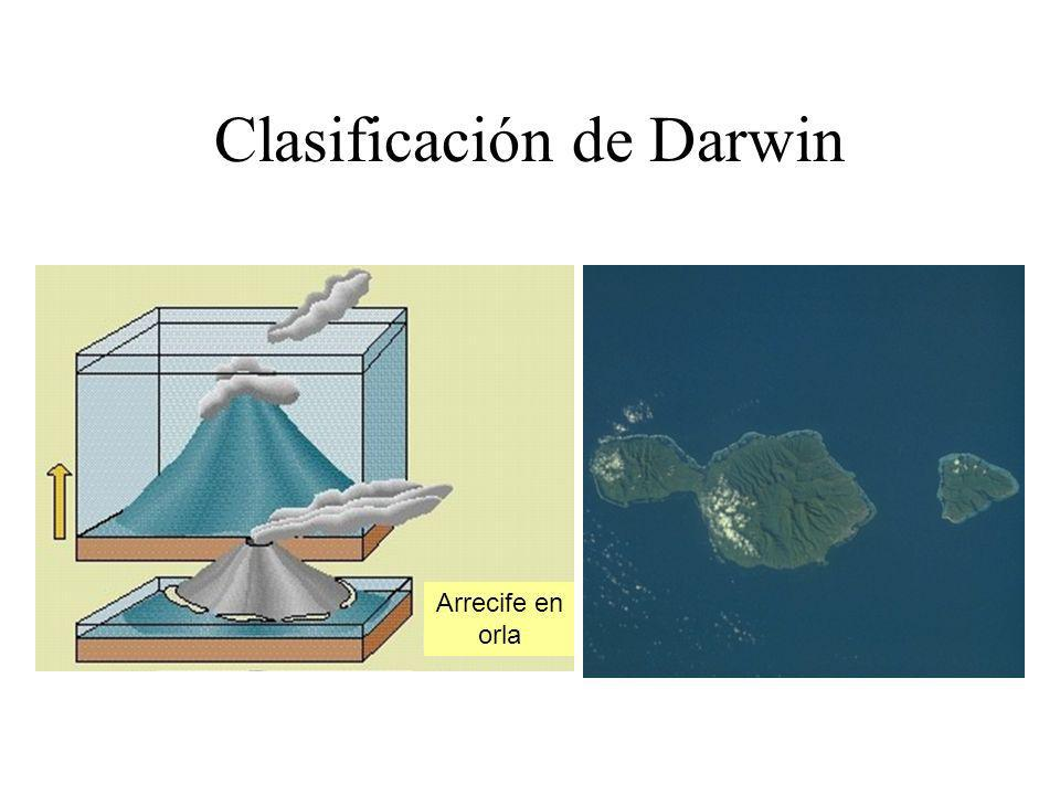 Clasificación de Darwin Arrecife en orla