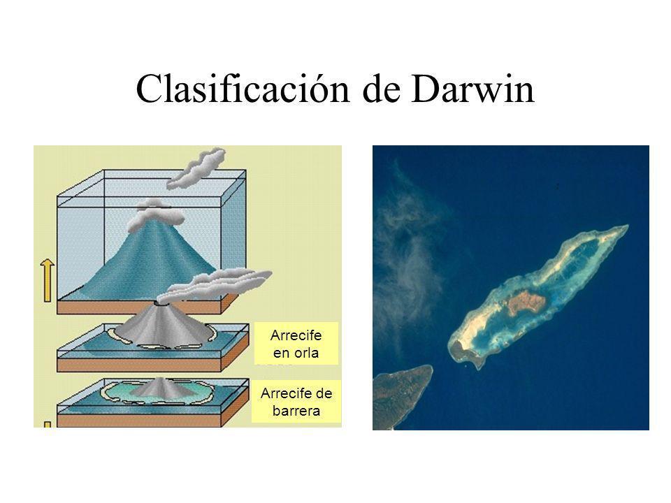 Clasificación de Darwin Arrecife en orla Arrecife de barrera