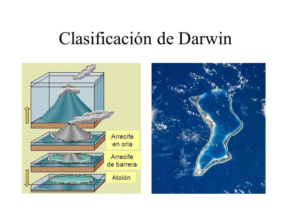 Clasificación de Darwin Arrecife en orla Arrecife de barrera Atolón