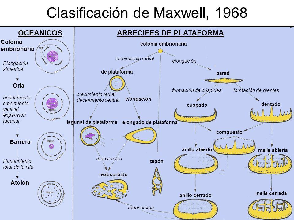Clasificación de Maxwell, 1968 Colonia embrionaria Elongación simetrica hundimiento crecimiento vertical expansión lagunar Hundimiento total de la isl