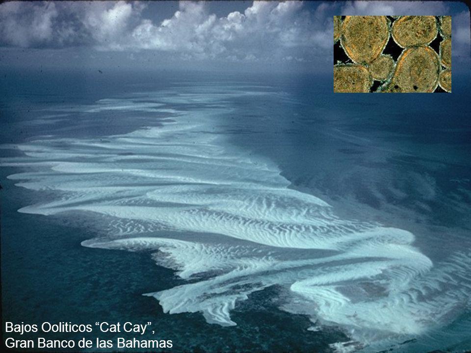 Bajos Ooliticos Cat Cay, Gran Banco de las Bahamas