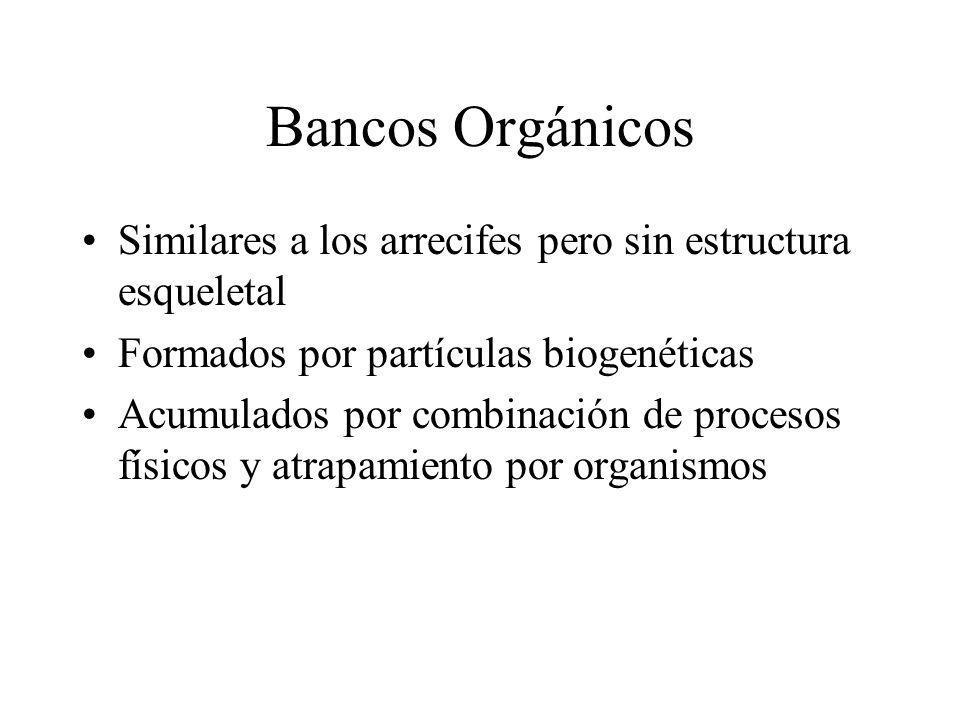 Bancos Orgánicos Similares a los arrecifes pero sin estructura esqueletal Formados por partículas biogenéticas Acumulados por combinación de procesos