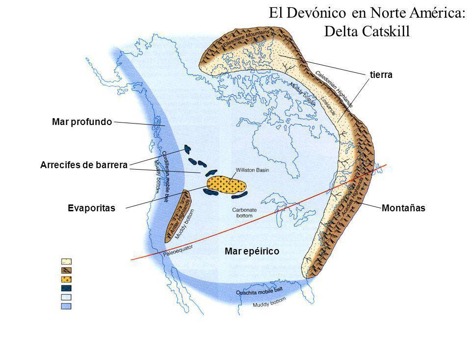 El Devónico en Norte América: Delta Catskill Montañas tierra Mar epéirico Arrecifes de barrera Evaporitas Mar profundo