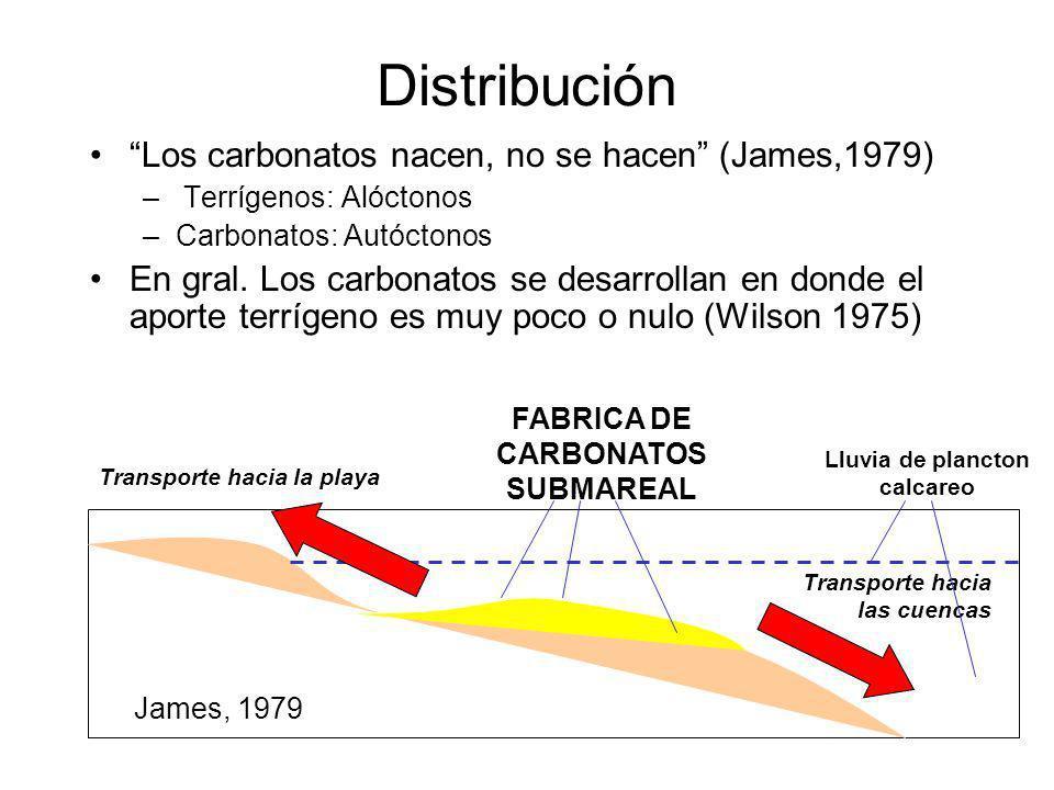 Distribución Los carbonatos nacen, no se hacen (James,1979) – Terrígenos: Alóctonos –Carbonatos: Autóctonos En gral. Los carbonatos se desarrollan en