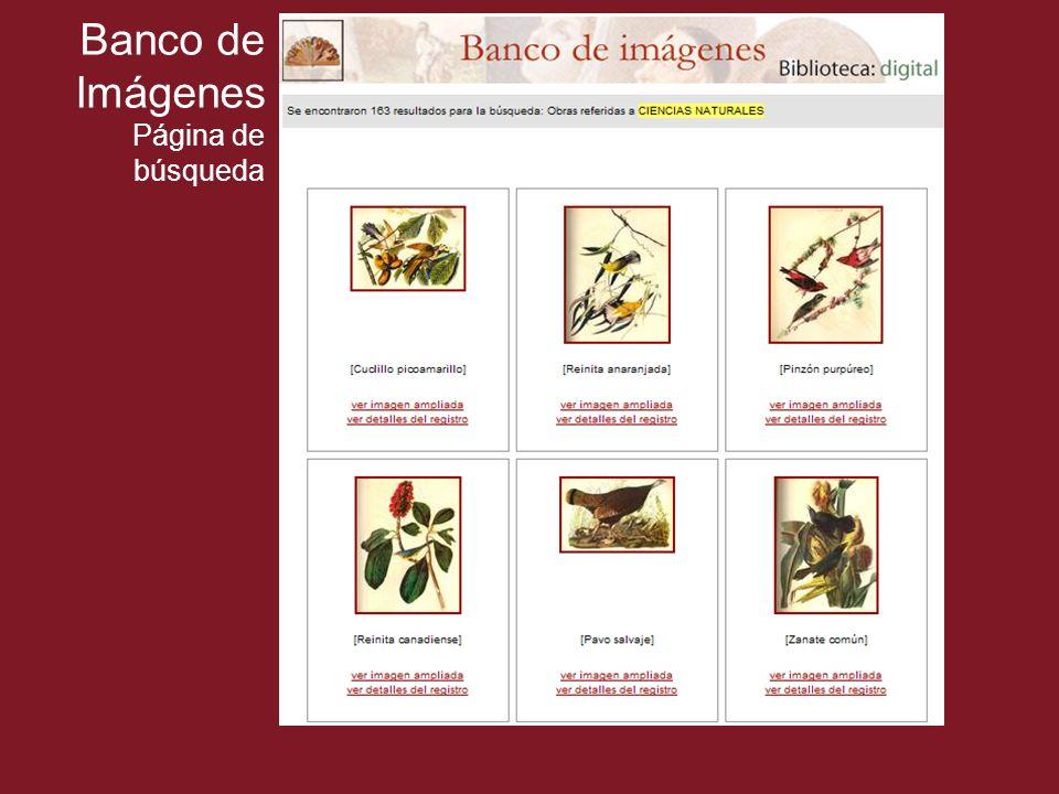 Banco de Imágenes Página de búsqueda