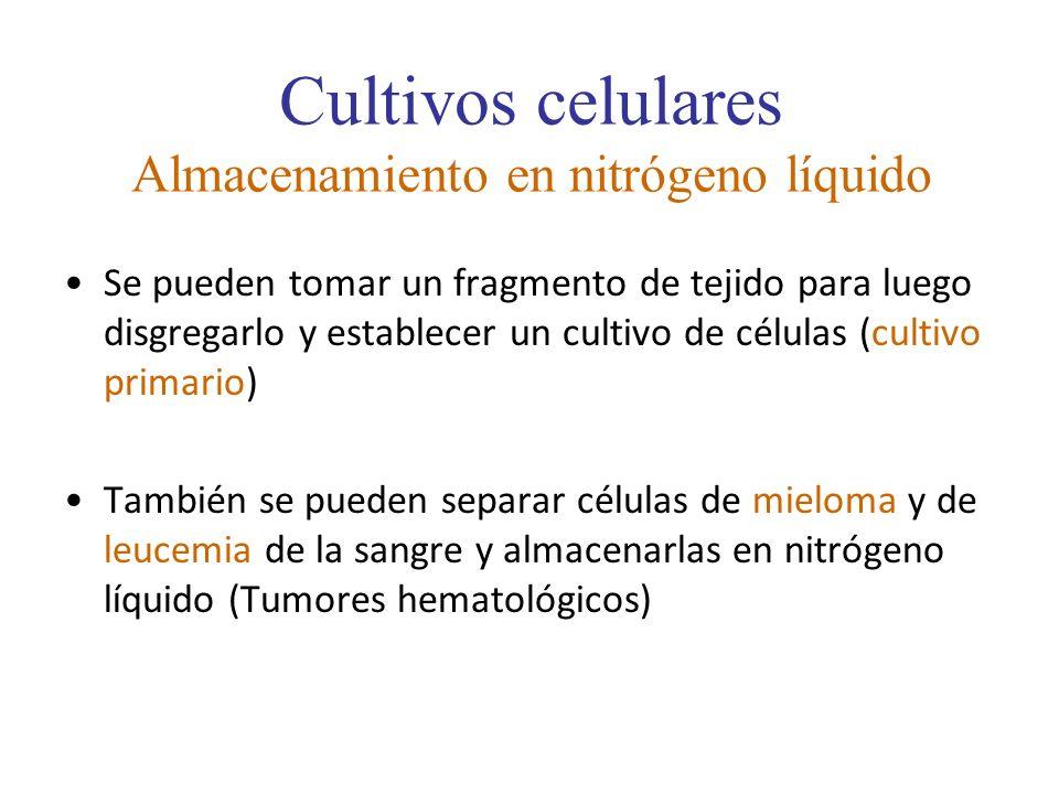 Cultivos celulares Almacenamiento en nitrógeno líquido Se pueden tomar un fragmento de tejido para luego disgregarlo y establecer un cultivo de célula