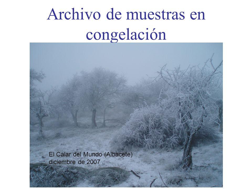 Archivo de muestras en congelación El Calar del Mundo (Albacete) diciembre de 2007