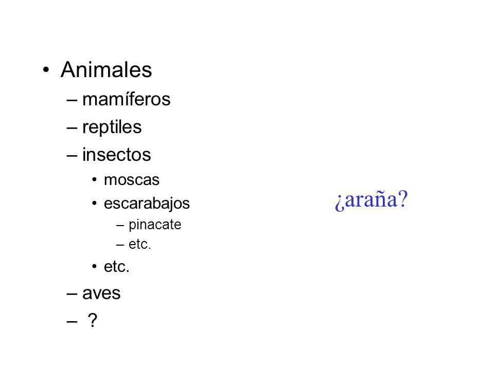 Animales –mamíferos –reptiles –insectos moscas escarabajos –pinacate –etc. etc. –aves – ? ¿araña?