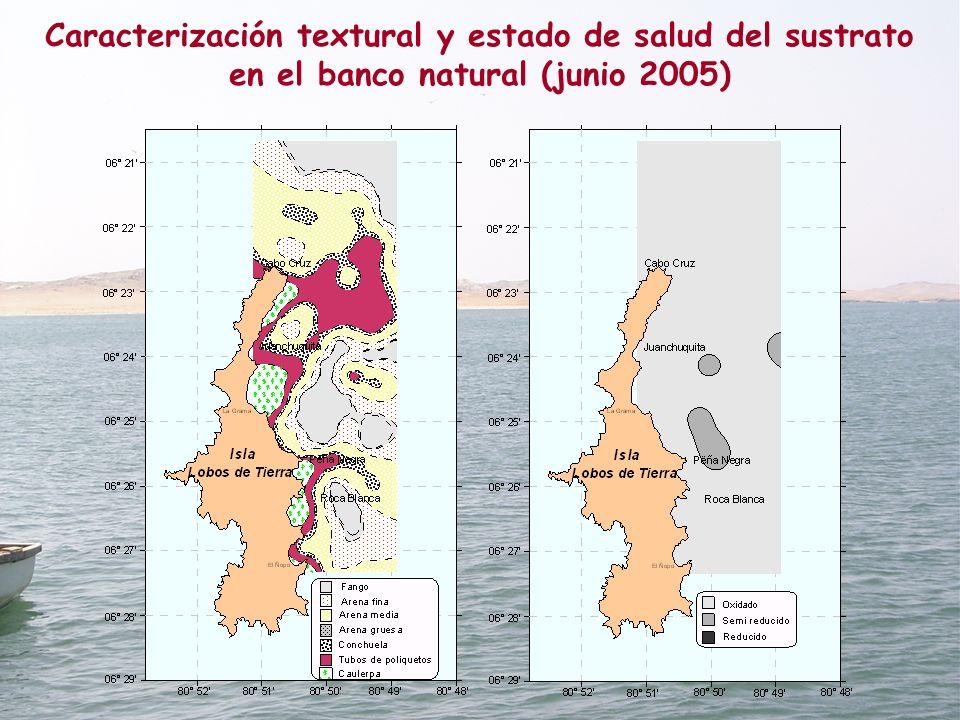 Caracterización textural y estado de salud del sustrato en el banco natural (junio 2005)