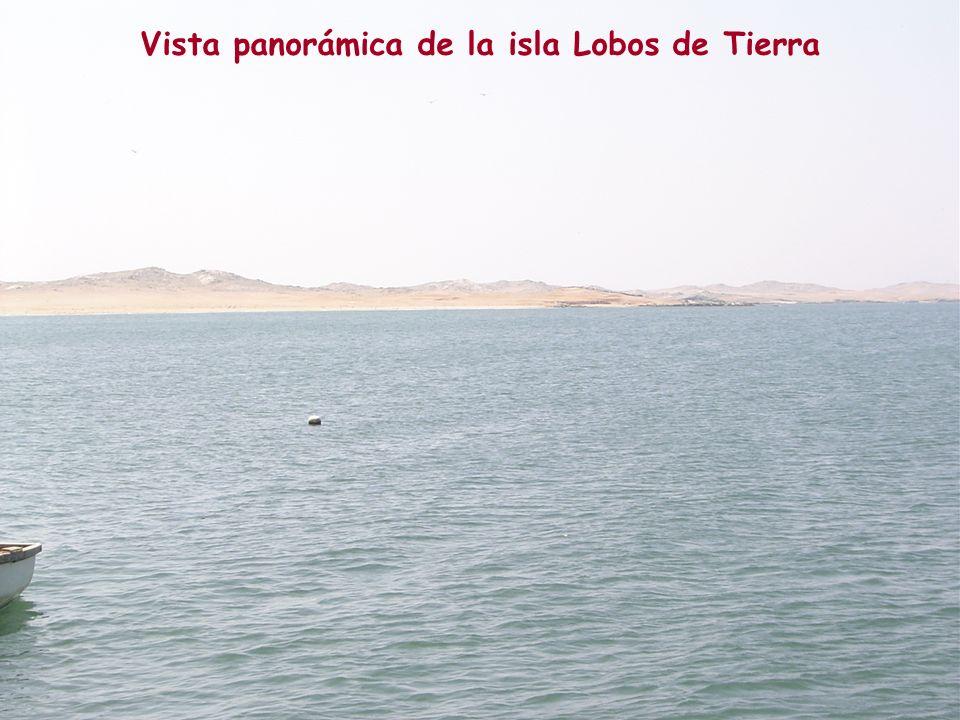Stock poblacional de concha de abanico en la isla Lobos de Tierra,1995 -2005.