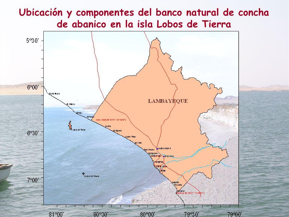 Datum: PSDA 56 Pëña Negra Roca Blanca Juanchuquita Cabo Cruz La Grama El Ñopo Lobos de Tierra 80° 48 06° 22 06° 24 06° 23 06° 25 06° 26 06° 27 06° 28 06° 29 06° 21 80° 49 80° 50 80° 51 80° 52 06° 20 FG B C D 1467.6 ha AEmed B E C D 4473.7 ha AEmax AA 458.3 ha N D EE A BC N