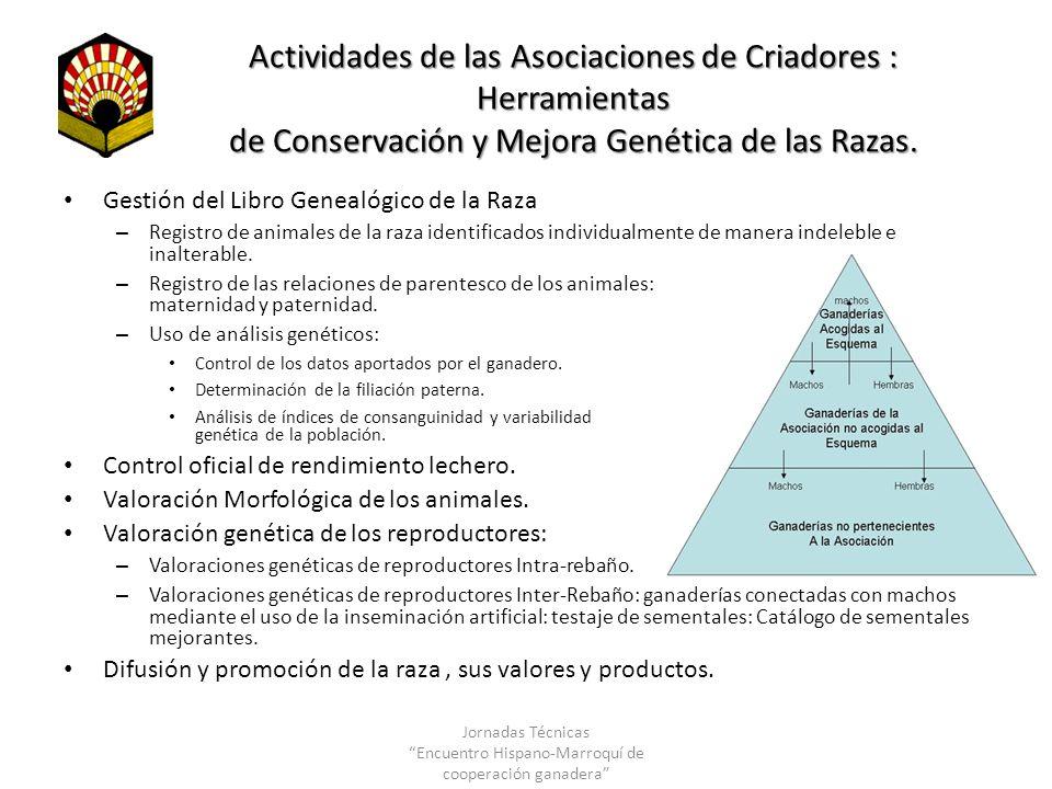 Actividades de las Asociaciones de Criadores : Herramientas de Conservación y Mejora Genética de las Razas. Gestión del Libro Genealógico de la Raza –