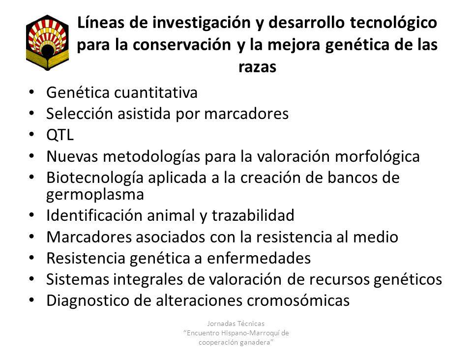 Líneas de investigación y desarrollo tecnológico para la conservación y la mejora genética de las razas Genética cuantitativa Selección asistida por m