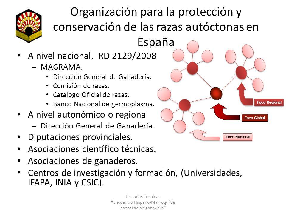 Organización para la protección y conservación de las razas autóctonas en España A nivel nacional. RD 2129/2008 – MAGRAMA. Dirección General de Ganade