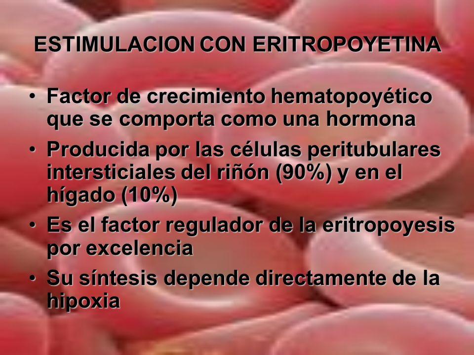 ESTIMULACION CON ERITROPOYETINA Células intersticiales peritubulares del riñón Sensor de oxígeno renal Síntesis de Eritropoyetina Células progenitoras eritroides de la médula ósea Hipoxia o masa eritrocitaria Incremento de la masa eritrocitaria eritrocitaria Incremento de la hemoglobina