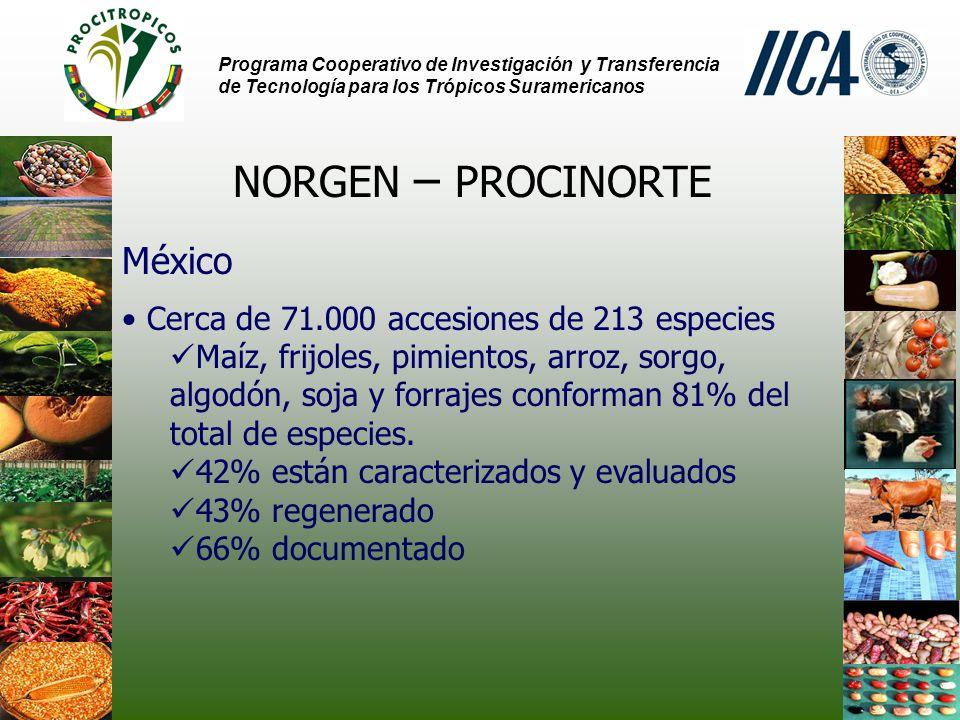 Programa Cooperativo de Investigación y Transferencia de Tecnología para los Trópicos Suramericanos NORGEN – PROCINORTE México Cerca de 71.000 accesiones de 213 especies Maíz, frijoles, pimientos, arroz, sorgo, algodón, soja y forrajes conforman 81% del total de especies.